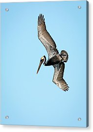 I See Dinner Acrylic Print by Dawn Currie