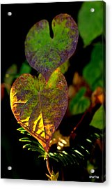 I See You In A New Light Acrylic Print