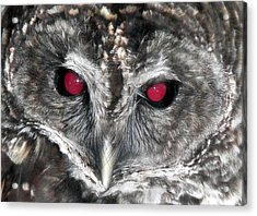 I See You Acrylic Print by Karen Wiles