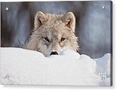 I See You Acrylic Print by Michael Cummings