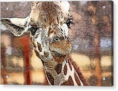I See You Acrylic Print by Pennie  McCracken