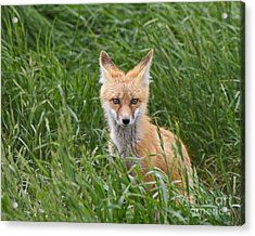 I See You Acrylic Print by Royce Howland
