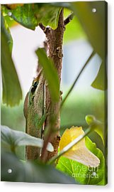 Acrylic Print featuring the photograph I See You by Sandy Adams