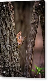 Acrylic Print featuring the photograph I See You by Susan Rissi Tregoning