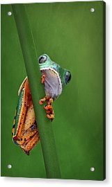 I See You - Tiger Leg Monkey Frog Acrylic Print