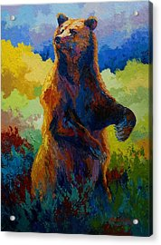 I Spy - Grizzly Bear Acrylic Print by Marion Rose