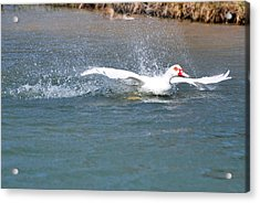 Acrylic Print featuring the photograph I Think I Can Fly  by Teresa Blanton