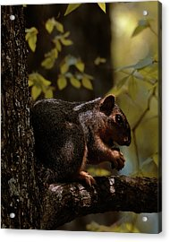 I Thought I Was Alone Acrylic Print