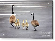 I Thought We Parked In This Row Acrylic Print