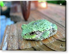 I Toad You So Acrylic Print by Randy Rosenberger