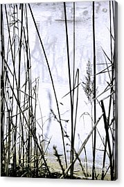 I Took The Road Less Traveled Acrylic Print by Robyn King