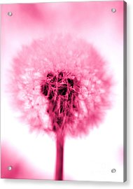 I Wish In Pink Acrylic Print by Valerie Fuqua