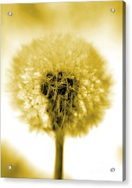 I Wish In Yellow Gold Acrylic Print by Valerie Fuqua