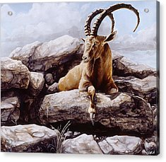 Ibex Acrylic Print