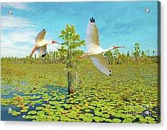 Ibis At Okefenokee Acrylic Print