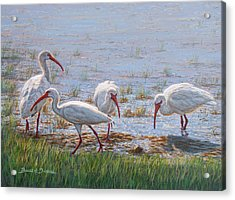 Ibis Excursion Acrylic Print by Bruce Dumas