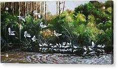 Ibis Landing Acrylic Print
