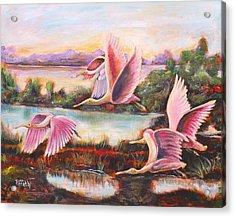 Scarlet Ibis Acrylic Print by Patricia Piffath