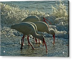 Ibises Acrylic Print by Juergen Roth