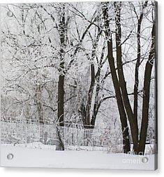 Ice Anyone Acrylic Print by Marsha Heiken
