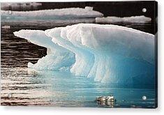 Ice Bears Acrylic Print by Elisabeth Van Eyken