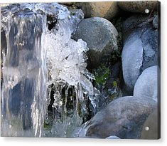 Ice Blossom Acrylic Print by Mel Crist