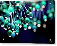 Ice Blue Crab Apples  Acrylic Print