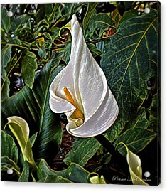 Acrylic Print featuring the digital art Ice Cream Calla Lily by Pennie  McCracken