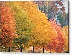 October Trees Acrylic Print
