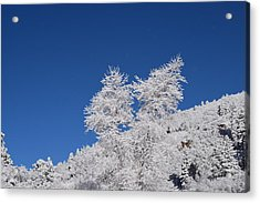 Ice Crystals Ute Pass Cos Co Acrylic Print