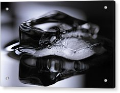 Acrylic Print featuring the photograph Ice Cube V3 by Rico Besserdich
