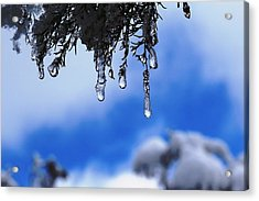 Ice Drops Acrylic Print