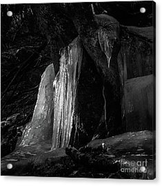 Icicle Of The Forest Acrylic Print