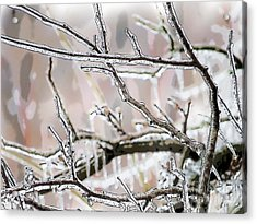 Ice Storm Ice Acrylic Print by Craig Walters
