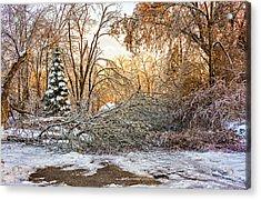 Ice Storm...day 2 Acrylic Print by Steve Harrington