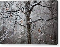 Ice Tree Acrylic Print