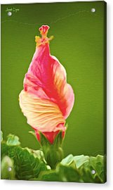 Icea Cream Flower - Pa Acrylic Print by Leonardo Digenio