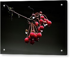 Iced Crab Apples Acrylic Print