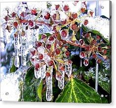 Iced Ivy Acrylic Print