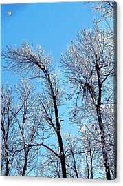 Iced Trees Acrylic Print by Craig Walters