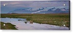 Iceland Sheep Reflections Panorama  Acrylic Print