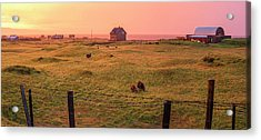 Acrylic Print featuring the photograph Icelandic Farm During Sunset by Brad Scott