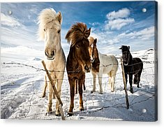 Icelandic Hair Style Acrylic Print by Mike Leske