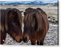 Icelandic Horses Couple Acrylic Print