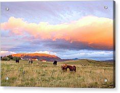 Acrylic Print featuring the photograph Icelandic Horses Under The Sunset by Brad Scott