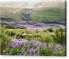 Icelandic Treasures Acrylic Print by William Beuther