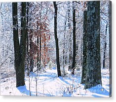 Icey Forest 1 Acrylic Print