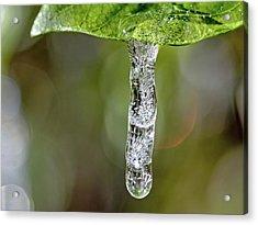 Icicle On Gardenia Leaf Acrylic Print