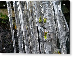 Acrylic Print featuring the photograph Icicles by Sharon Talson