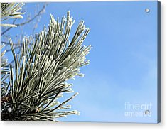 Acrylic Print featuring the photograph Icing On The Needles by Michal Boubin